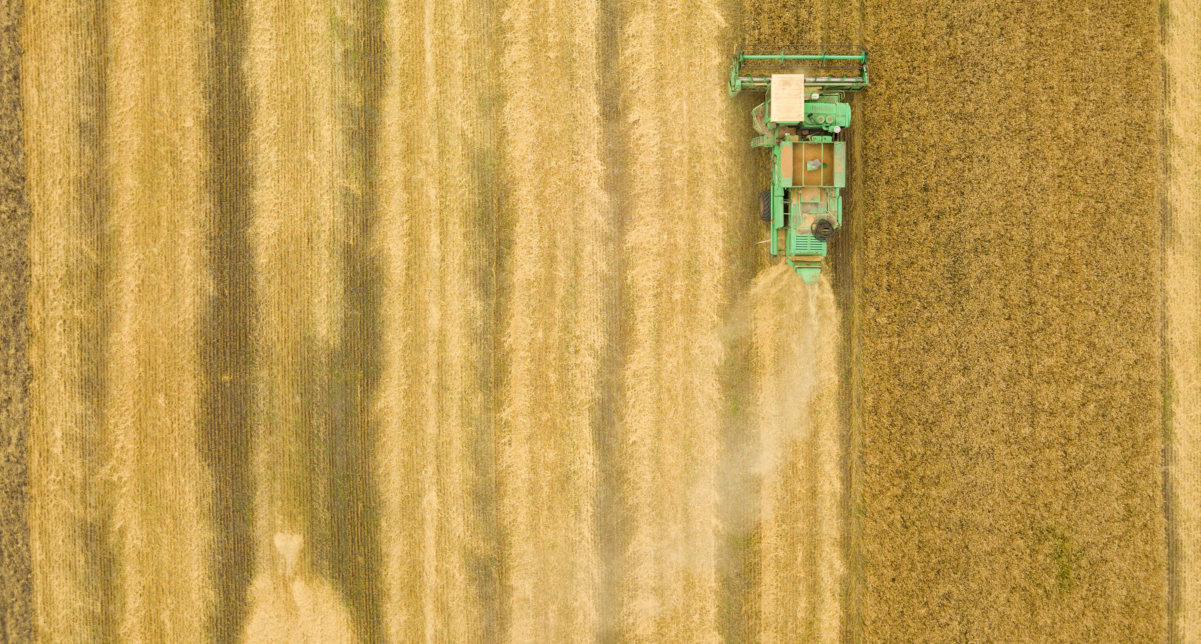 top-view-combine-harvester-gathers-the-wheat-at-PDDA4CH thin